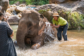 Washing elephants in the river at the Green Hill Valley Elephant camp in Magway Village near Bagan,Myanmar.