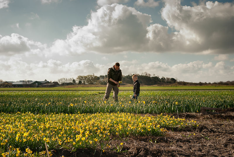 Father and son at work on the flower fields series 3of7