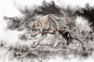 Art-digital-alain-Thimmesch-Loup-26