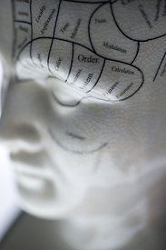 Side View of Phrenology Head