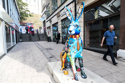 GoGo Hares in Norwich