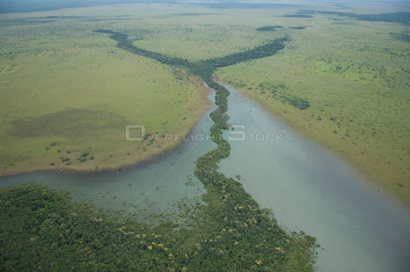 Aerial view of gallery rainforest in flood time on the plains of Northern Beni Department, Northeast Bolivia.