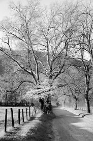SPARKS LANE CADES COVE SMOKY MOUNTAINS BLACK AND WHITE VERTICAL