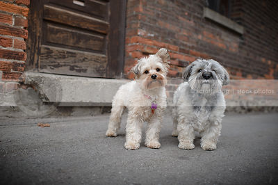 two cute little dogs standing together in urban alley