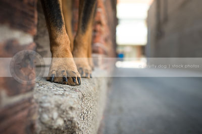 closeup of black and tan dog paws toes and nails in doorsill at urban alley