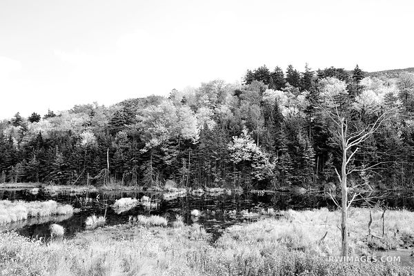 FOREST POND WHITE MOUNTAINS NEW HAMPSHIRE BLACK AND WHITE