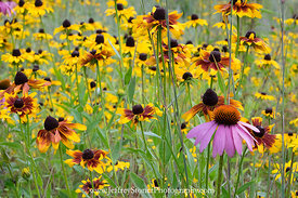 Wildflowers Abound