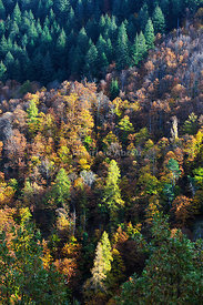Autumn time in the Serra da Estrela Nature Park, Portugal