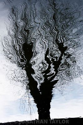 Reflected_tree
