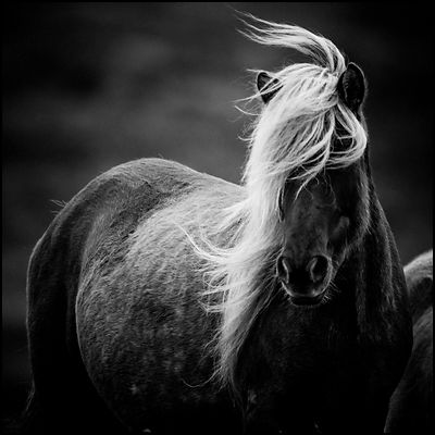 Wild and Romantic horse, Iceland 2015 © Laurent Baheux