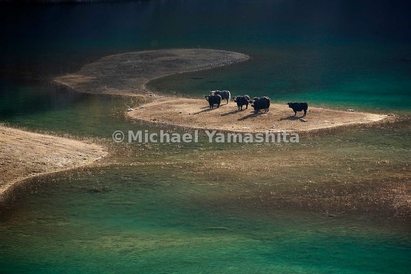 Upper Seasons Lake is a mythic hiding place of fire-breathing monsters. It's also a watering hole for yaks tended by the Tibetan villagers who live inside the Jiuzhaigou Reserve.
