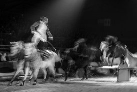 Cheval_Passion_20160122-0929-2