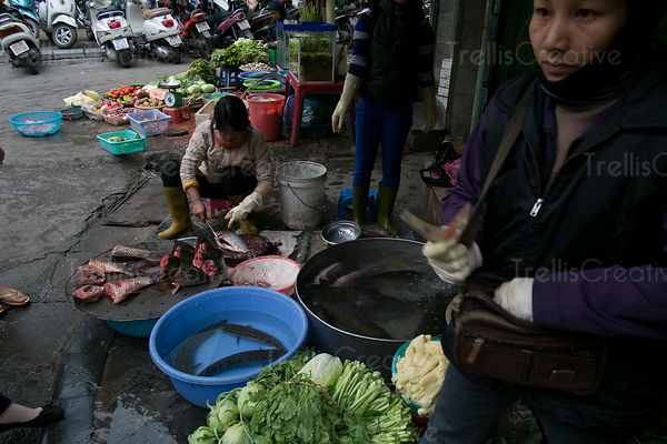 Fish vendor on the street at Hanoi, Vietnam