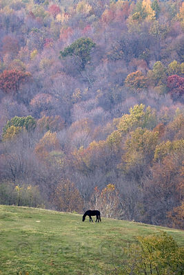 A lone horse on a hillside near Springfield, Ohio