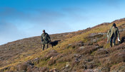 Shooting Red Grouse on an Estate in North Yorkshire, late in the season. Yorkshire Dales, UK