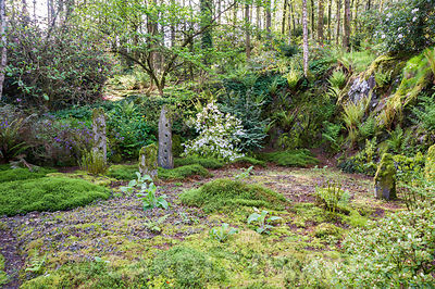 Quarry garden from where stone was quarried to build the house, now inspired by Japanese gardens and a love of wild plants including mosses and lichens, here carpeting foliose peltigera. Windy Hall, Windermere, Cumbria, UK