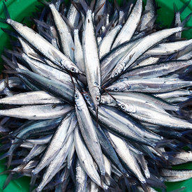 A bowl of fish in the market, Sao Tome