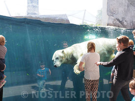 The fantastic Polar Bear