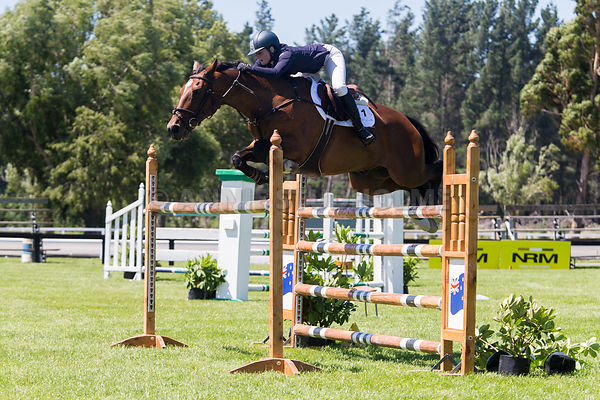 First Competition Equissage/Fiber Fresh NZ GP Horse photos