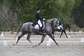 SI_Festival_of_Dressage_300115_Level_6_NCF_0164