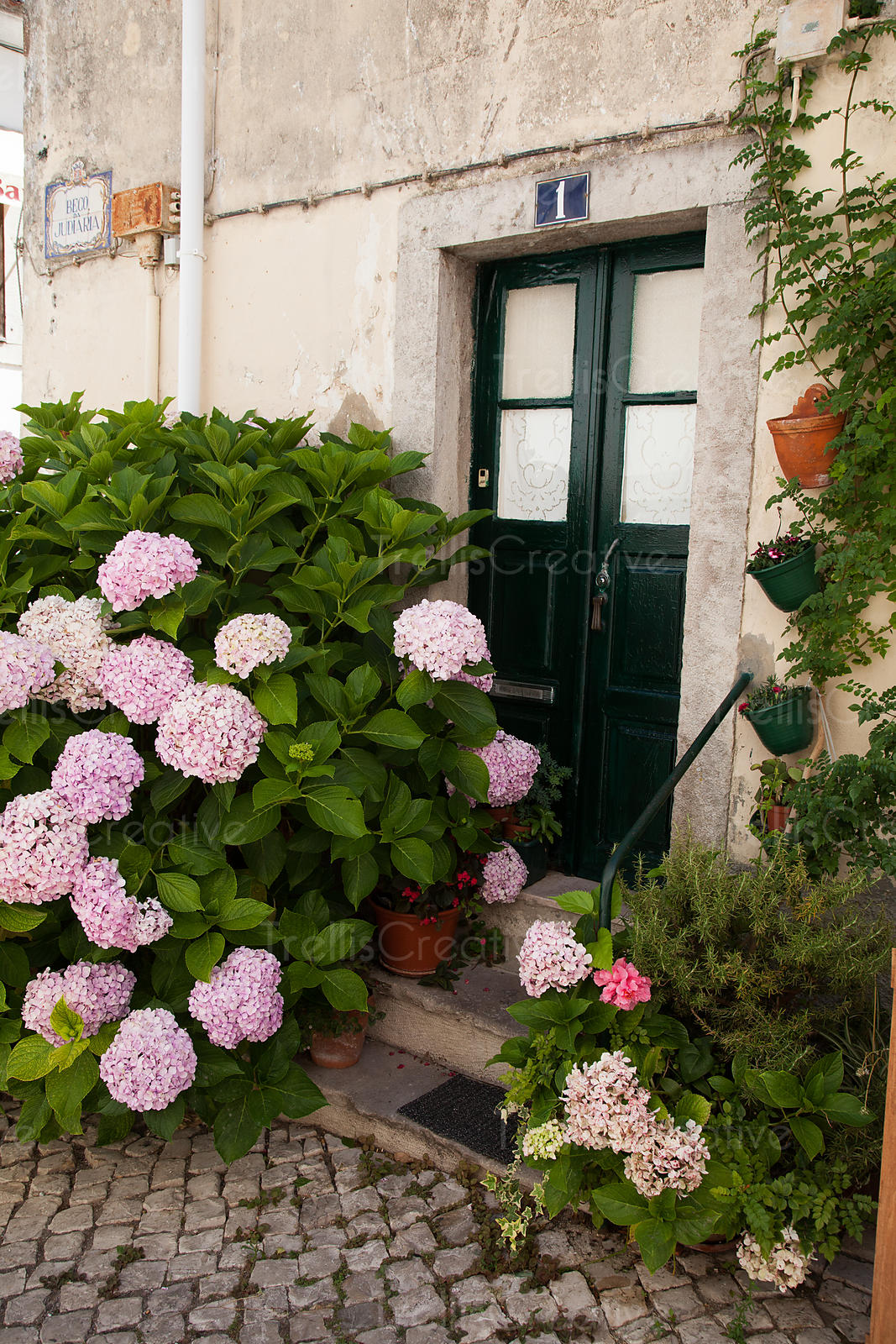 Pink flowers in front of closed door in historic city of Sintra, Portugal