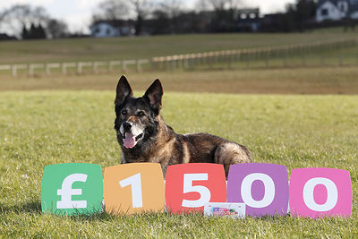 Yorkshire Building Society Charitable Foundation has donated £1,500 to Fireside K9 - the charity which looks after retired police dogs. The charity will use the money to buy new kennels, blankets, toys etc for the dogs..Kiro