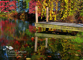 Reflections of Fall in the Pond