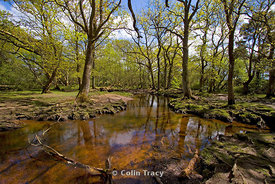 Spring - Ober Water, New Forest