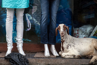 Goat sitting at the feet of a manequin, Bandra West, Mumbai, India.