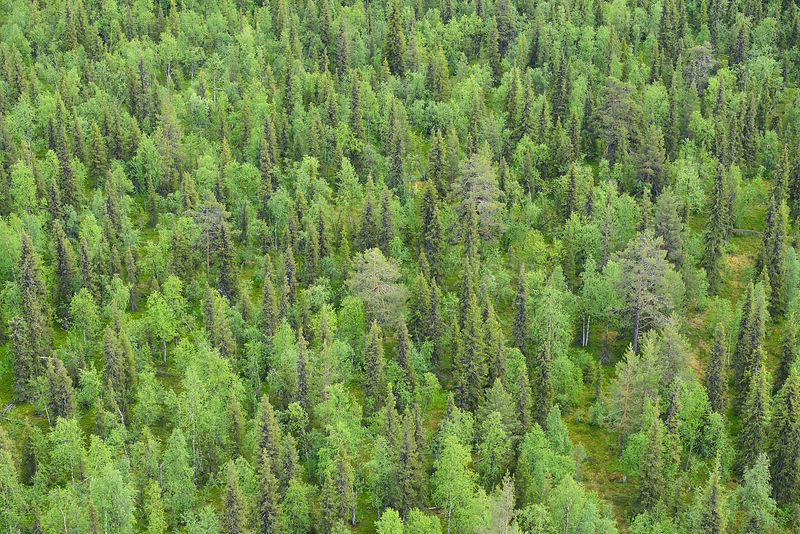 Aerial view of taiga boreal forest, Sjaunja Bird Protection Area, Greater Laponia Rewilding Area, Lapland, Norrbotten, Sweden, June 2013.