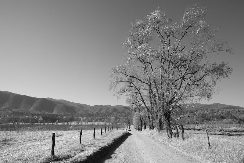 HYATT LANE CADES COVE SMOKY MOUNTAINS BLACK AND WHITE
