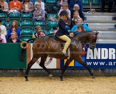 HOYS - Riding Pony photos