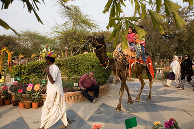 India - Delhi - A man sleeps whilst a camel takes children for a ride at the Annual Garden Festival at the Garden of the Five Senses