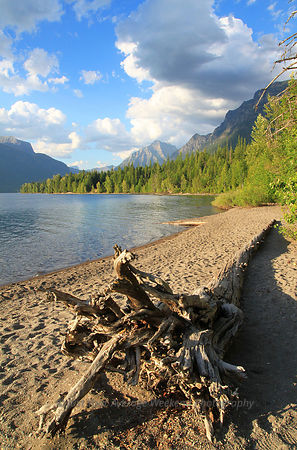 Lake McDonald Driftwood