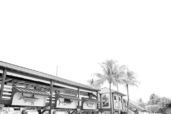 ISLAMORADA FLORIDA KEYS FLORIDA BLACK AND WHITE