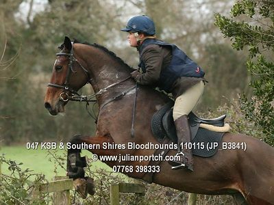 2015-01-11 KSB & Southern Shires Bloodhounds photos
