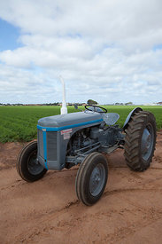 Fergie tractor in a field of carrots