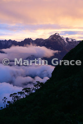 PER_1367_Cloud_Forest_at_Dawn_from_Pacaymayu_Camp_SiteEA