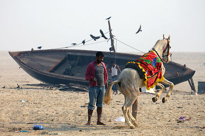 A horse gives rides to Indian pilgrims visiting the Ganges River in Varanasi, India.