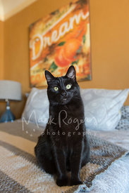 Black cat on bed with art in background