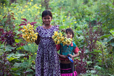 In a gorgeous and totally candid scene, a woman and her two daughters pick flowers on a farm in Dhapa, directly opposite the main landfill for Kolkata, India.