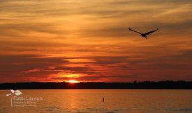 Sea Gull in Presque Isle Bay at Sunset