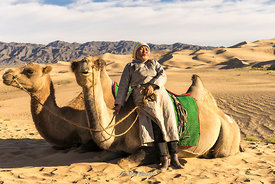 A woman taking a rest with camels in the South Gobi Desert, Mongolia.  In the Khongoryn Els sand dunes in Gobi Gurvansaikhan National Park