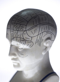 Picture of Phrenology Head