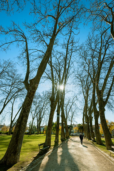 Mouchão Park in Winter. An oasis of tranquility in the middle of the historic city of Tomar. Portugal