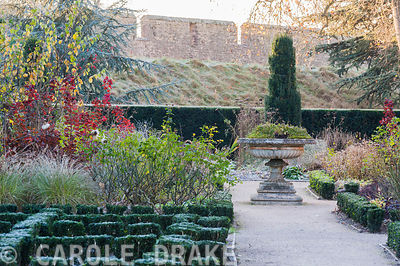 The East Garden at the Bishop's Palace, Wells featuring a knot garden of euonymus planted in the summer with varieties of the bishop series of dahlias