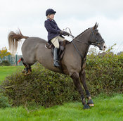 Katie Robinson jumping a hedge near the meet in Long Clawson