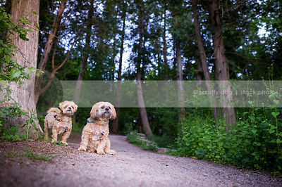 two small cute dogs posing on path with trees