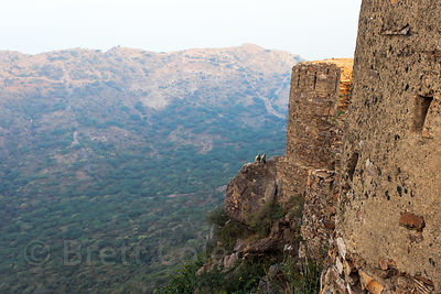 Langur monkeys on a rock overlook at Taragarh Fort, Ajmer, Rajasthan, India