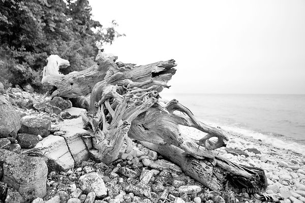 DRIFTWOOD ROCKY BEACH DOOR COUNTY ROCK ISLAND WISCONSIN BLACK AND WHITE